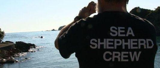 「野生イルカの捕獲が残酷なら、水族館のイルカはどうなのか……」A-port挑戦中の映画監督がWAZA勧告を語る